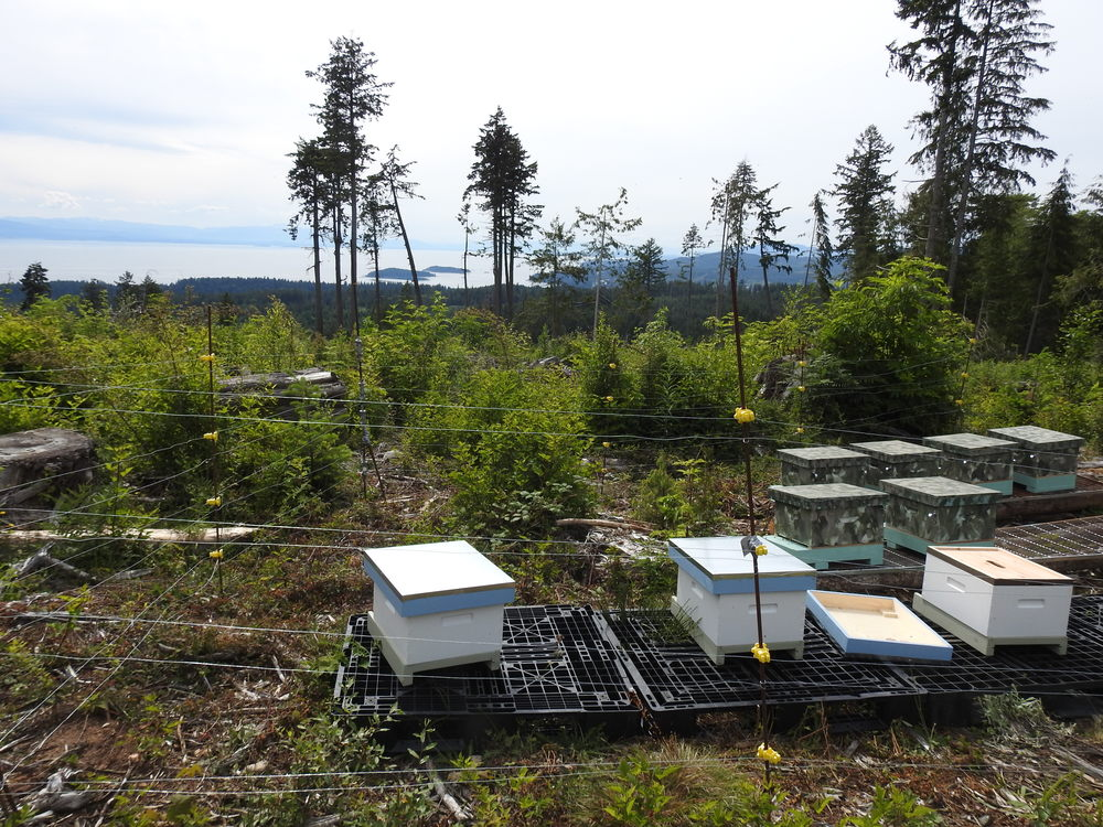 Bee Hives with a great view, inside an electric fence...