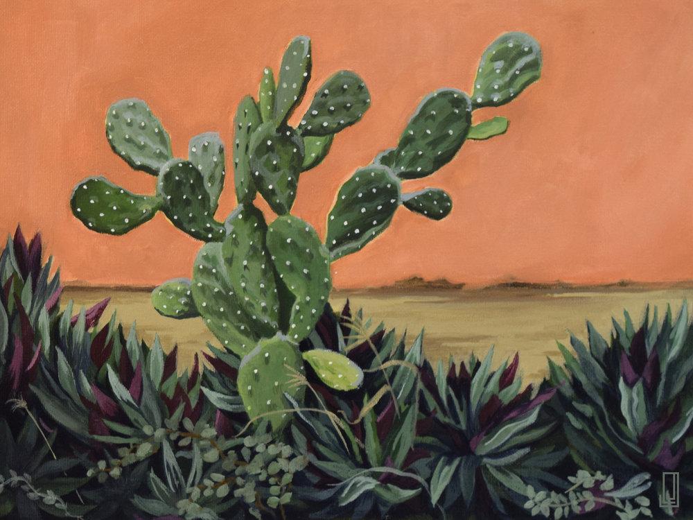 Cactus del Vencindario