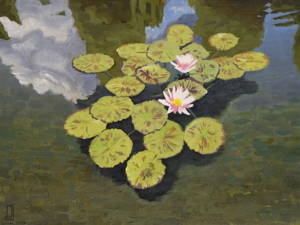 Biltmore Water Lilies