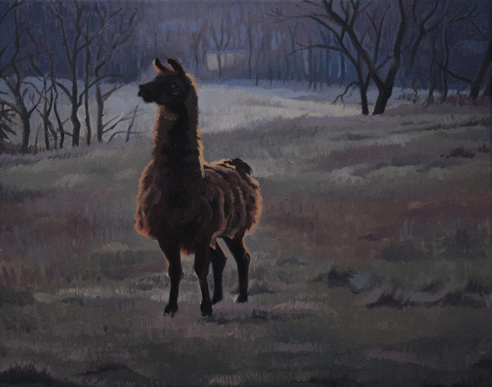 Evening Llama
