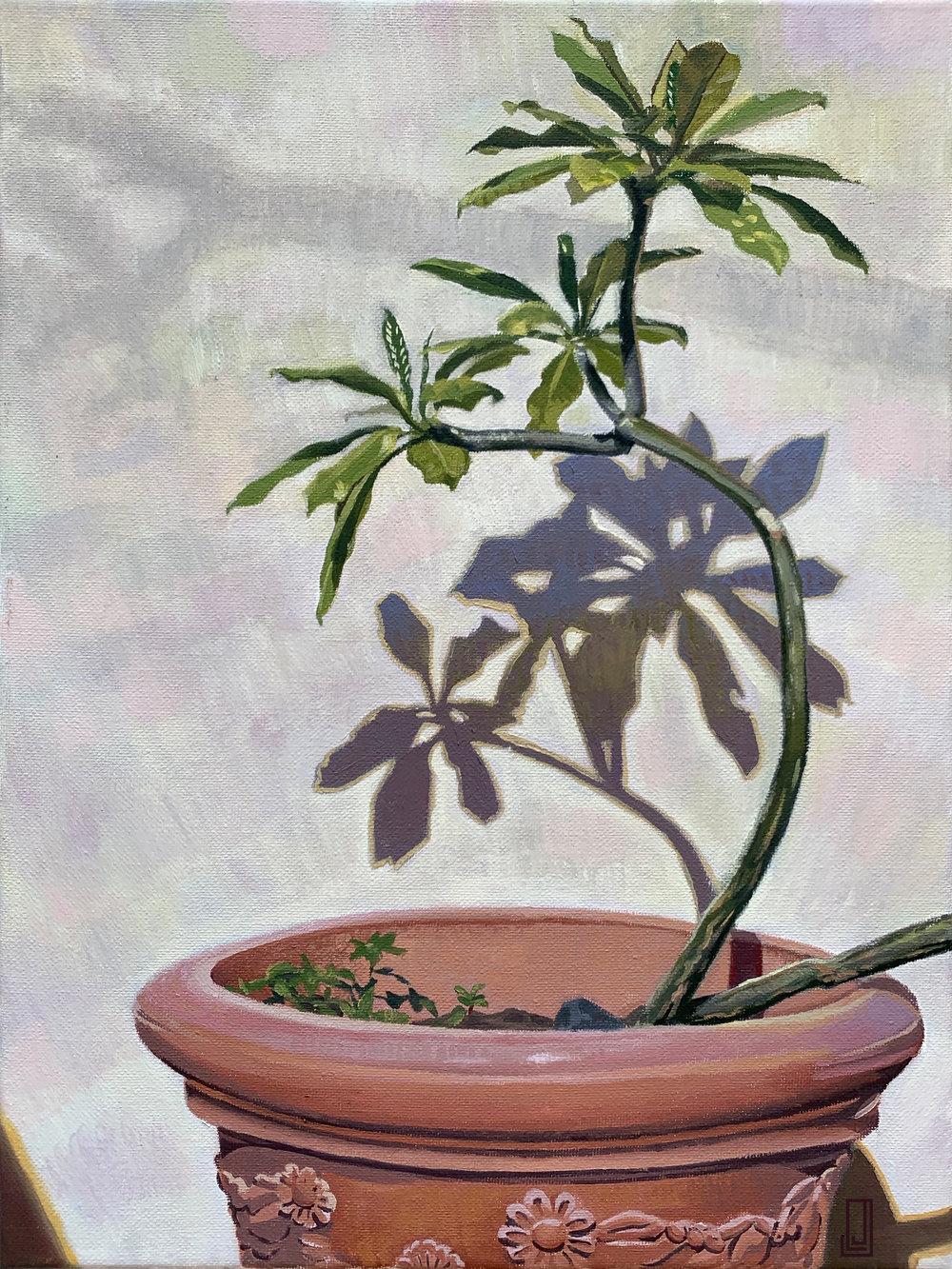 OSJ Plant in Sun