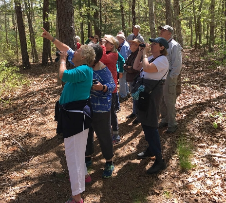THERE IT IS!—More than two dozen hikers and birders joined Gretchen Moran Towers as she led our 2017 Spring Trail Walk pointing out and identifying various species in perfect May weather.