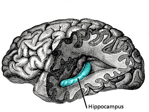 Source:  Gray's Anatomy ,  Plate 739