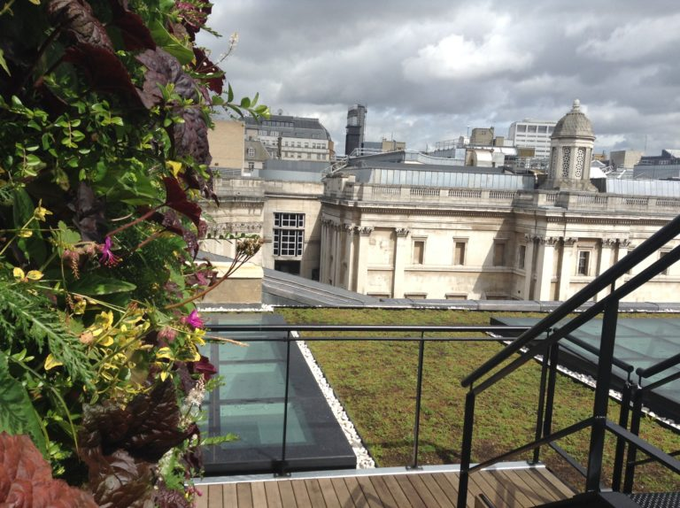This green roof in Canada is easy to maintain and offers a longer lifespan than typical roofs.