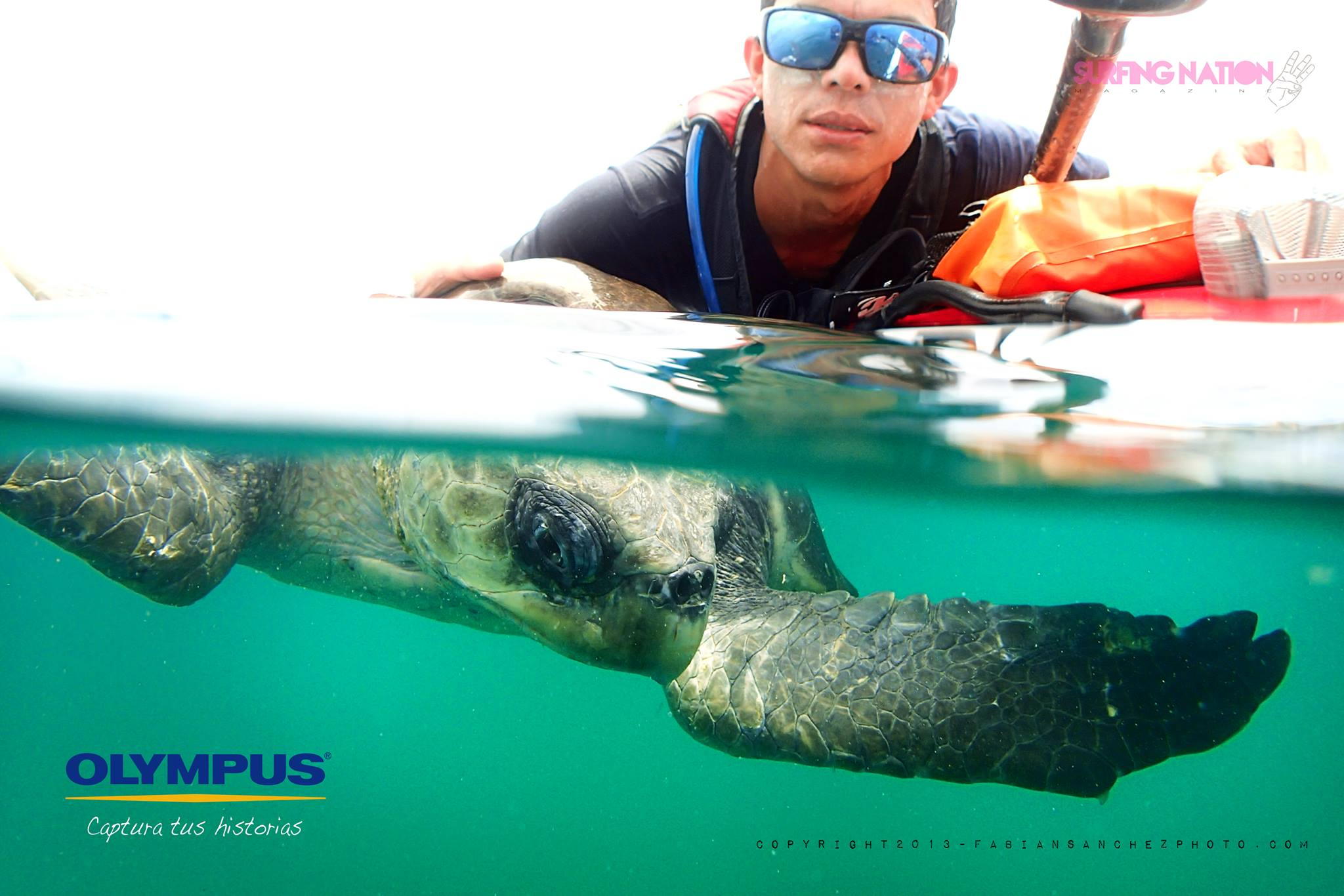 SUP with turtles in Costa Rica