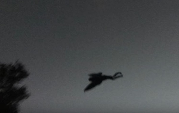 Recent Mothman sighting