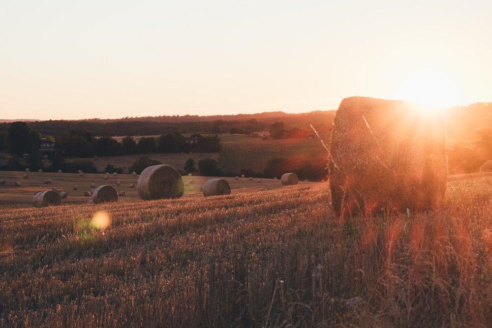 hayfield (Hailey).jpg