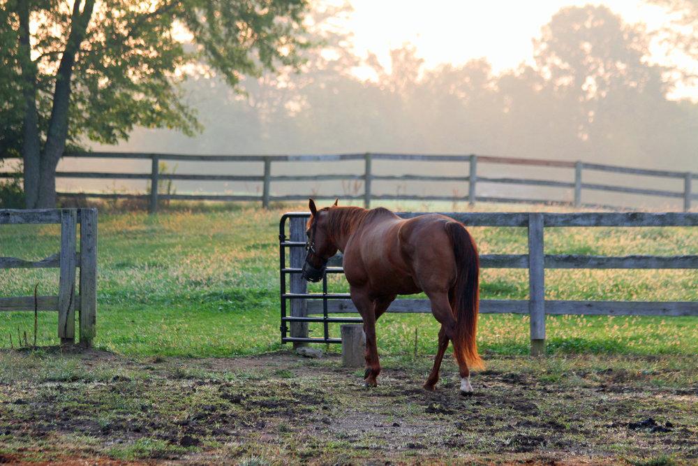Horse - 3.jpg