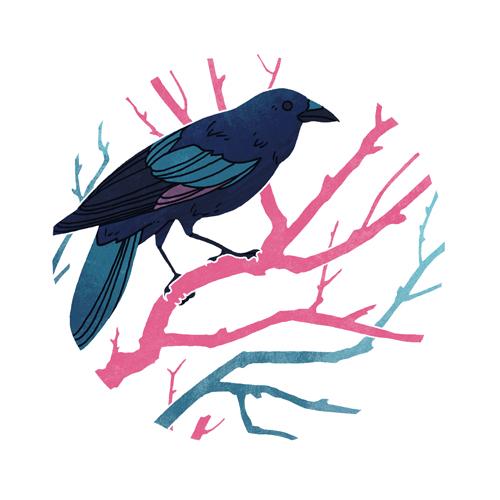 American Crow  digital, 2015