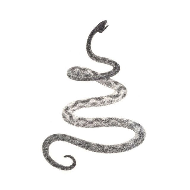 #greekmyths #greekmythology #illustration #pencildrawing #graphite #pencil #drawing #greekmythologyart #snakeart  #greekart #snakeillustration