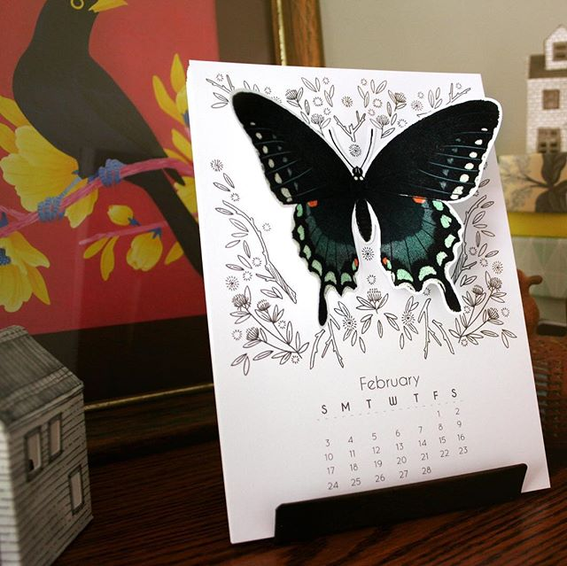 Finally got my calendars photographed and listed! New butterfly calendars in 2D and 3D form. 🦋 . . #2019calendar #desktopcalendar #calendar #deskcalendar #Etsy #onetsy #etsyseller #papergoods #illustratedcalendar #paperaddict #swallowtailbutterfly #swallowtail #spicebushswallowtail