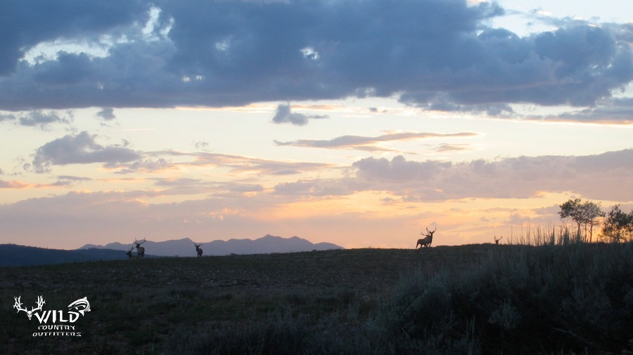 wildlife utah bull elk mountain sunset.jpg
