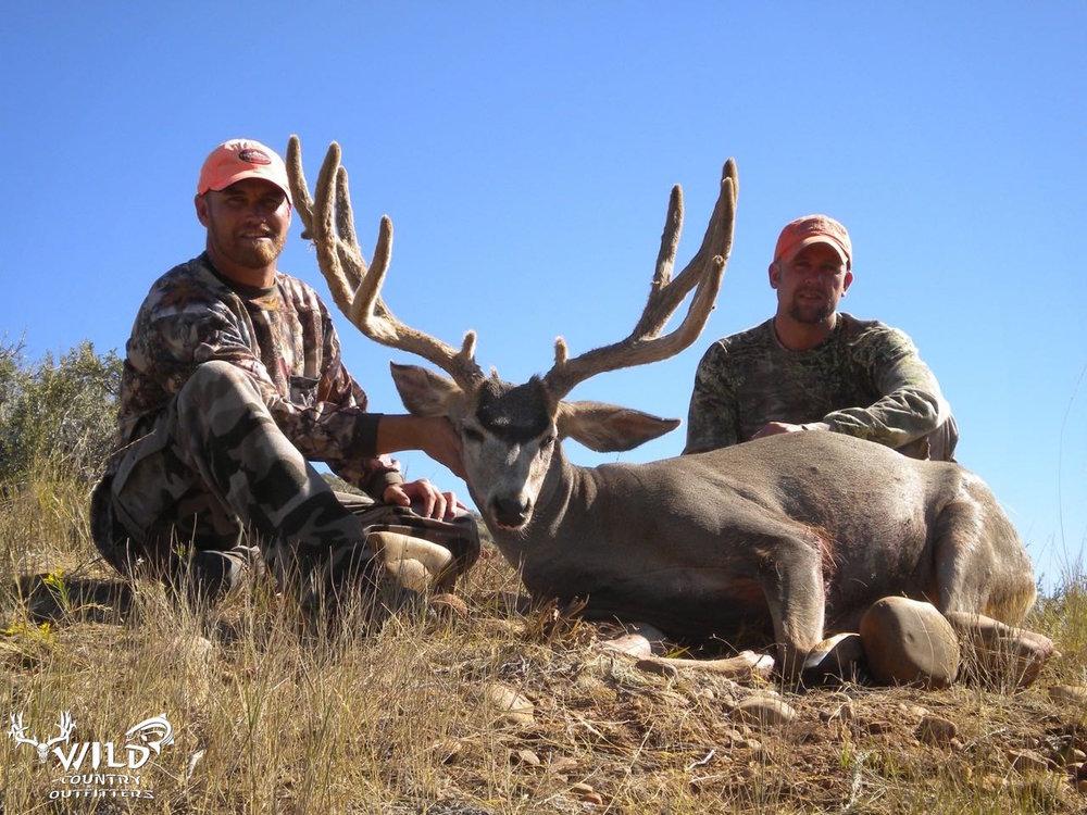 utah buck mule deer hunt velvet (5).jpg
