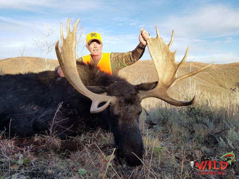 Deseret Shiras Moose 2016 utah Baltazar Rizzo.jpg