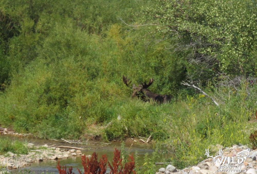 Utah Wildlife - 1.jpg