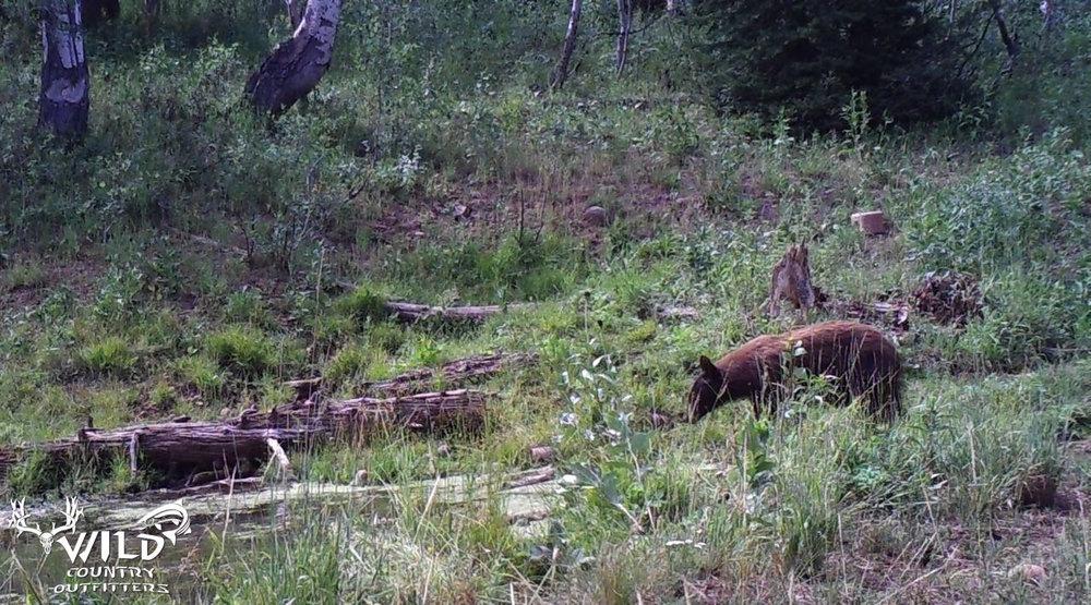 Utah Wildlife - 3.jpg