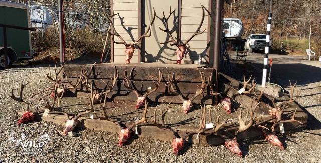 utah+buck+deer+hunt+2015+antlers.jpg