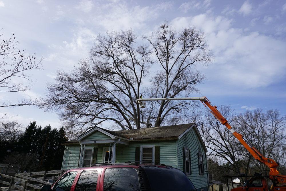 Tree Trimming in Pendleton