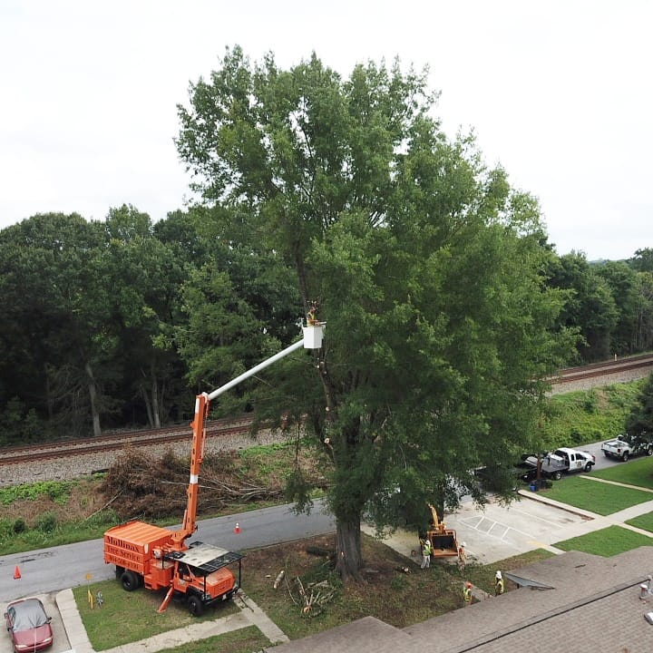 Aerial View of Tree Removal in Liberty