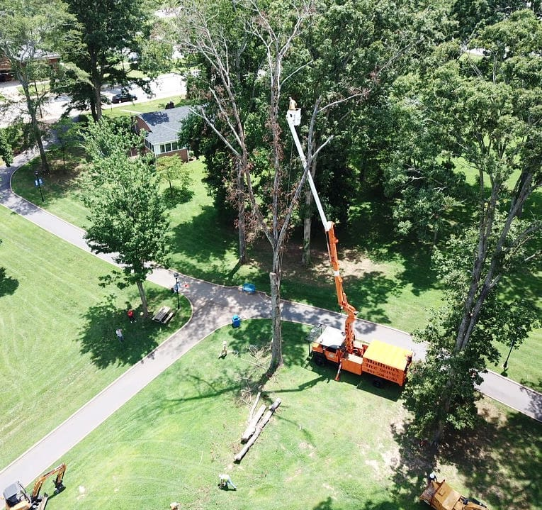 Tree Removal at Southern Wesleyan University