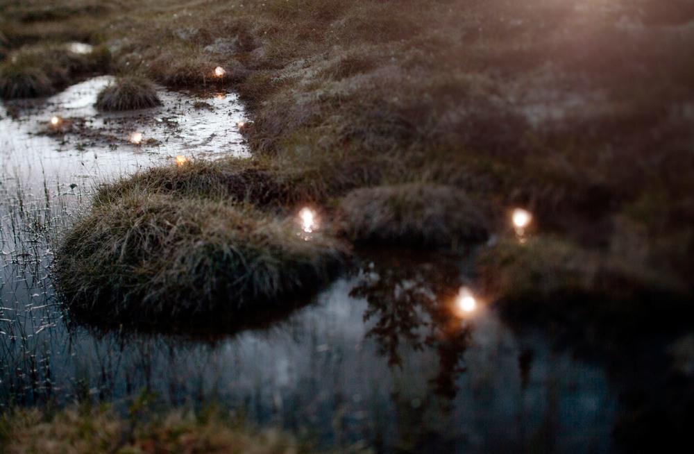 Shining Marsh.jpg