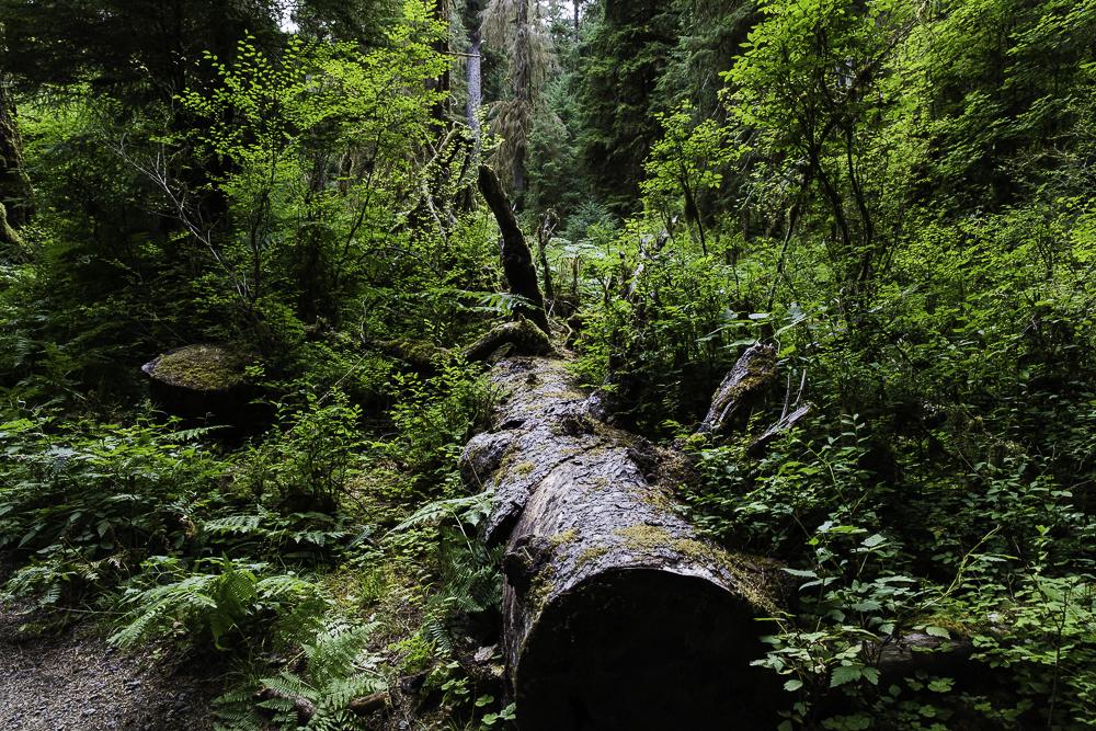 washington ho rainforest2.jpg