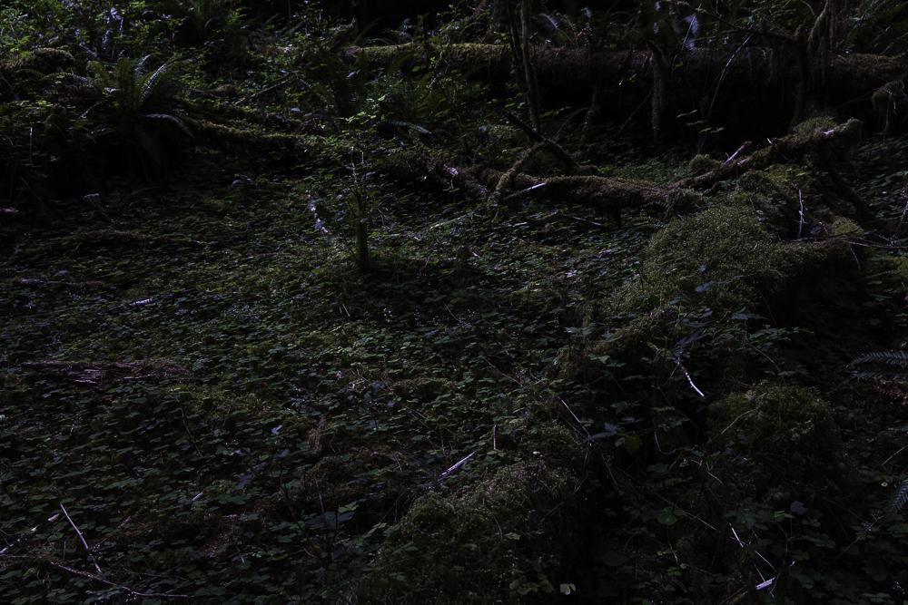 washington ho rainforest4.jpg