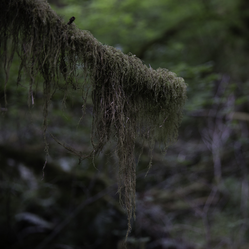 washington ho rainforest6.jpg