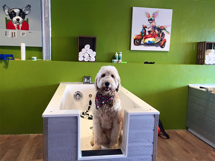Lather a pet bath house self service full service pet grooming lather2g solutioingenieria Choice Image