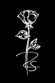 Rose Logo2.jpg