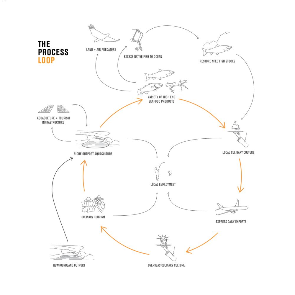 Fish-Process.png