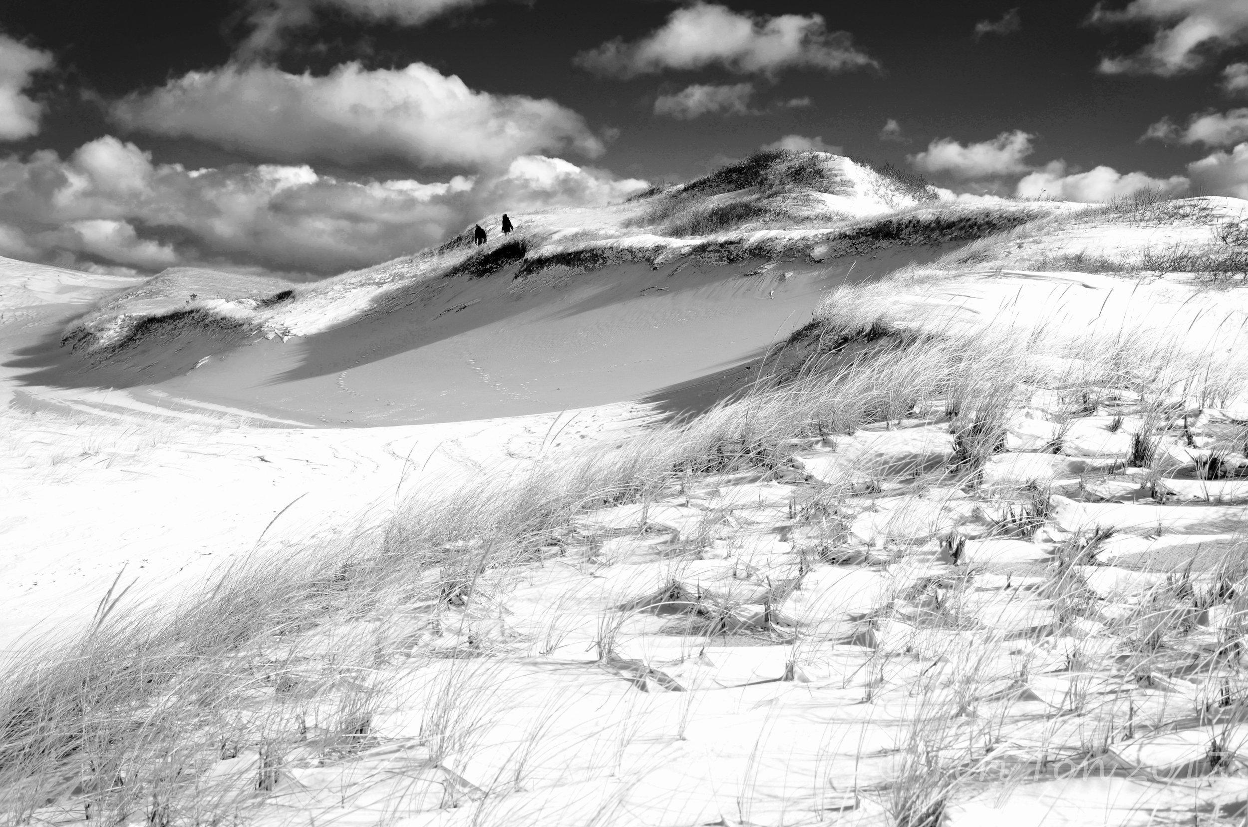 Provincetown dunes