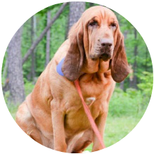 MIDWEST SEARCH DOGS Dedicated to training highly qualified K9s for Search and Rescue of lost or missing persons. Midwest Search Dogs provides several search disciplines, free of charge, to assist Law Enforcement, Fire Departments, EMA, and Government Agencies in their community.