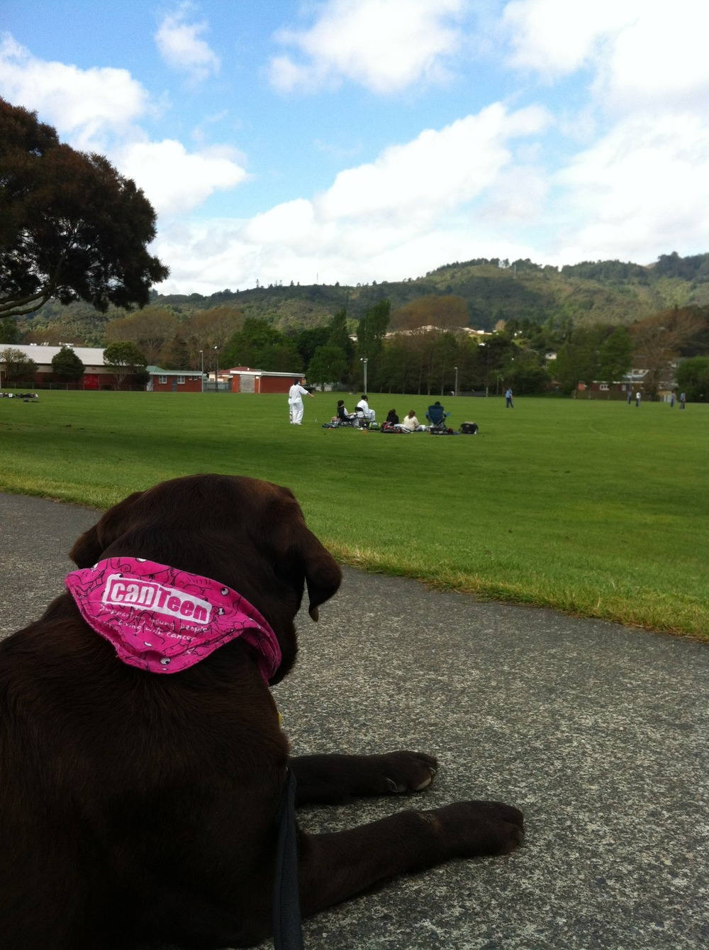 Scooby at Stokes Valley cricket.jpg
