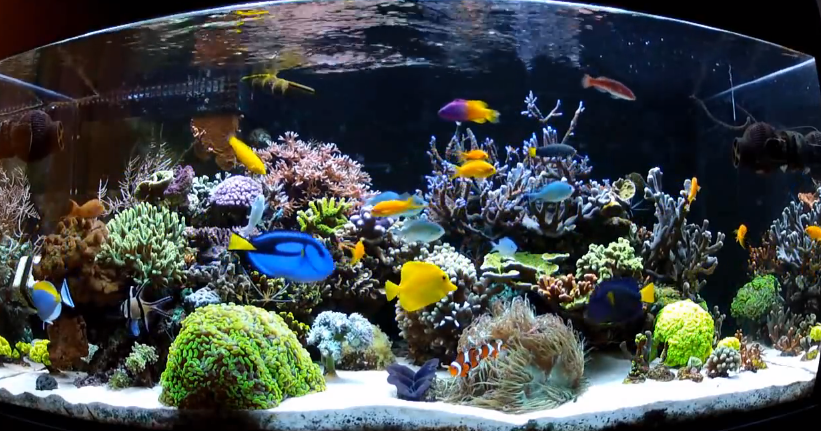 Saltwater-Aquarium-Fish-for-Beginners.png
