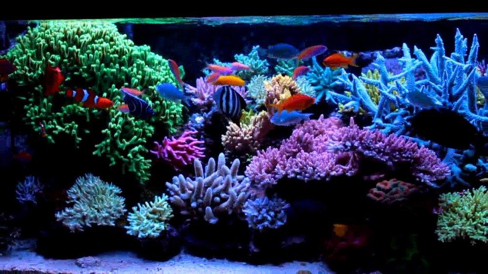 reef face.jpg