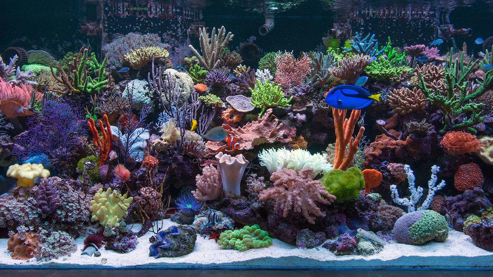 ro reef.jpg