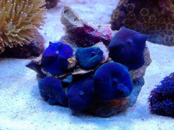 bluemush.jpg