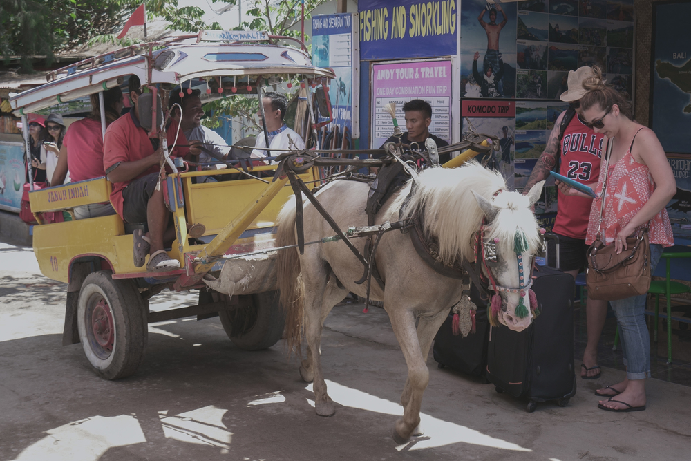 Horse carts for tourist use.jpg