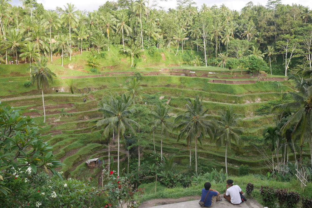 A view overlooking the Tegallalang Rice Terrace