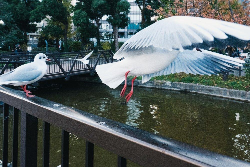 Ueno bird park.jpeg