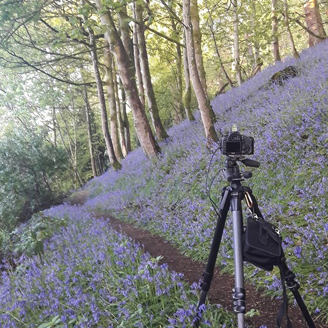 Back again at Ballathie for some shots of bluebells. The fogs rolled off but the sun is coming!