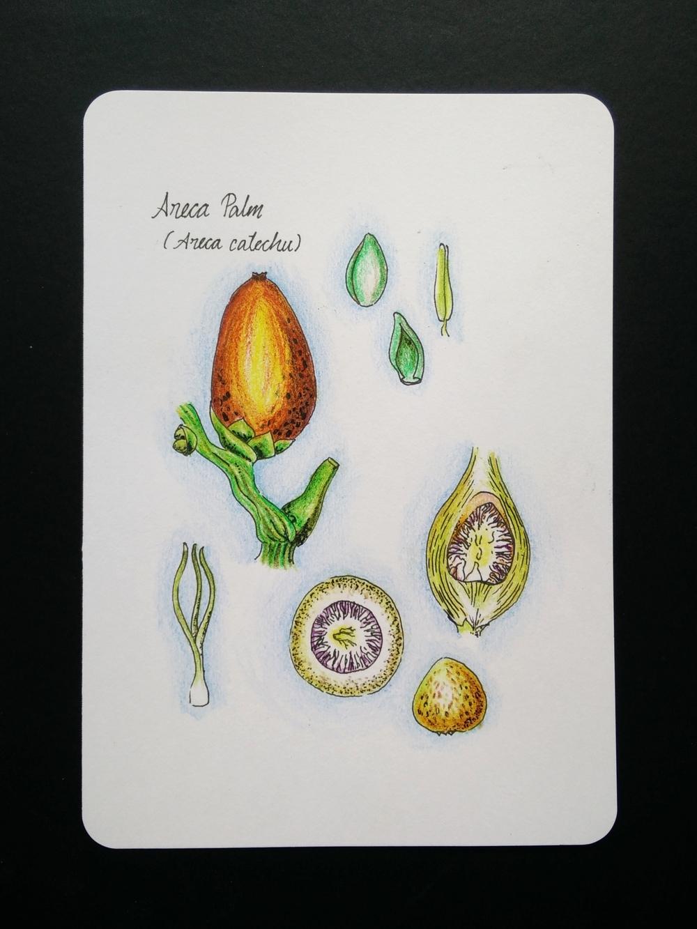 Seed_46.JPG