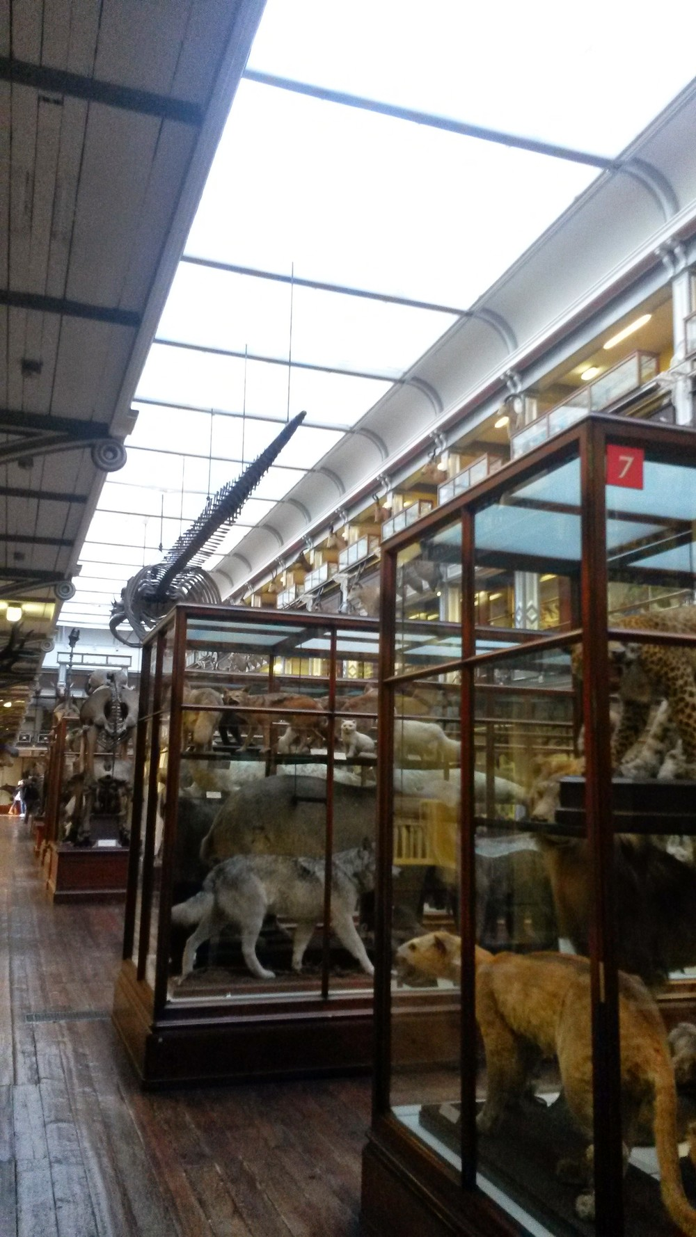 Natural History Museum (1).jpg