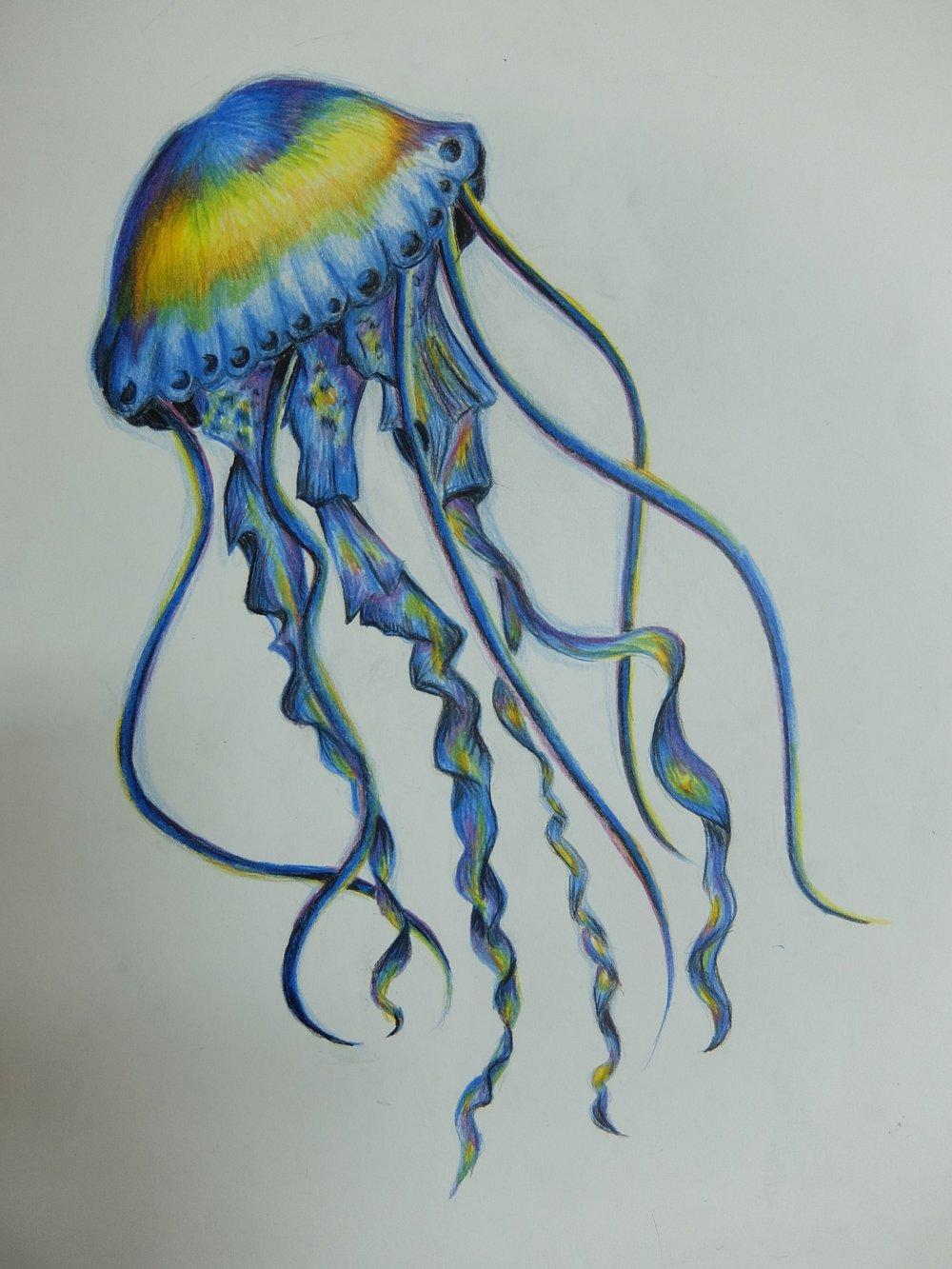 Jellyfish by Preme, 10 years old, Canadian International School, Abu Dhabi, UAE