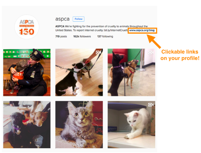 Unlike Some People Our Cat Follows >> Instagram S Going To The Dogs And Cats Make Sure Your Rescue