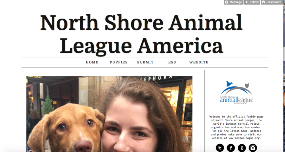North Shore Animal League America uses Tumblr as an additional channel for their Instagram content. This is great way to keep their blog active with content that can be showcased to a wider audience than just on Instagram.