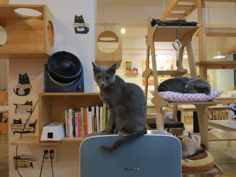 Warm colors, quality air ventilation and soft materials are some of the techniques used to create a stress-free environment for animals (Photo by Feline DaCat via Flicker)
