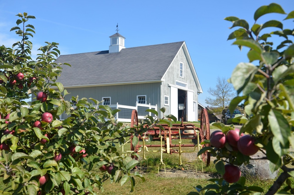 Barn and Apples-1.JPG