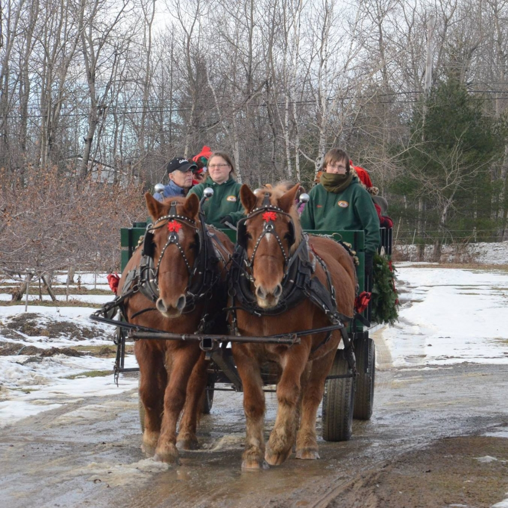 Christmas Horse.jpg